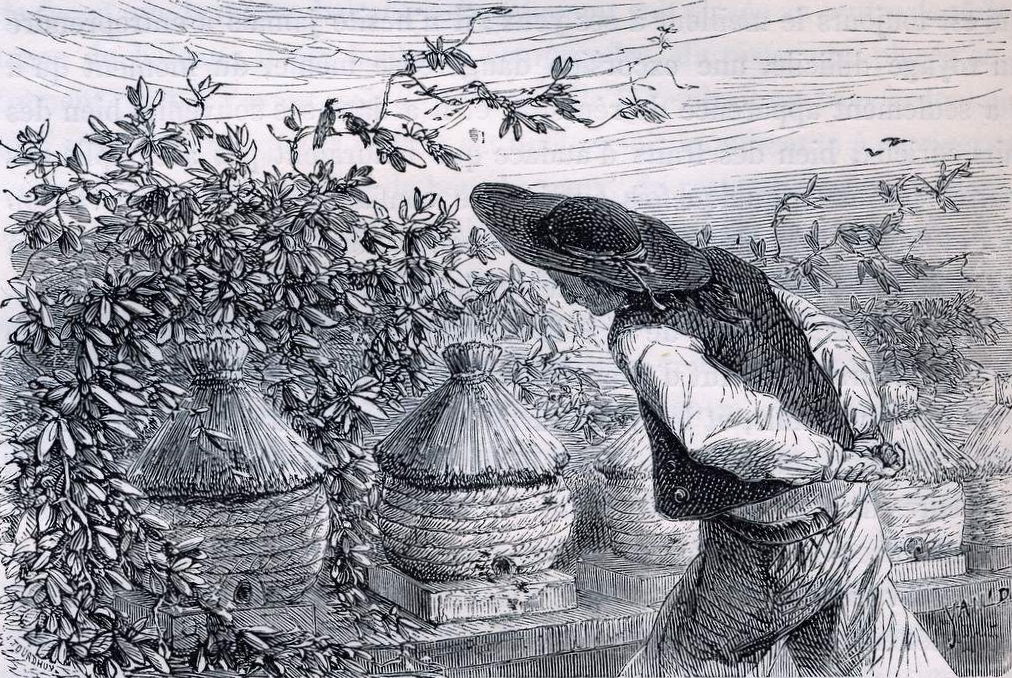 Telling the bees - a Breton beekeeper and his hives